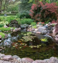 Water and Fish Care