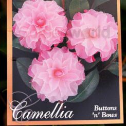 Camellia Buttons 'n' Bows